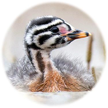 http://www.looduskalender.ee/n/pildid/linnuvaatlejad.png