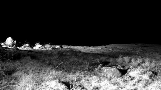 So the jackal camera image looks at night..