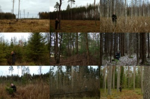 The Conservation Biology Working Group at the University of Tartu commemorates the ending year with an  image series on a forest theme, where our people introduce different views of what a forest actually can be that have caused polemics this year