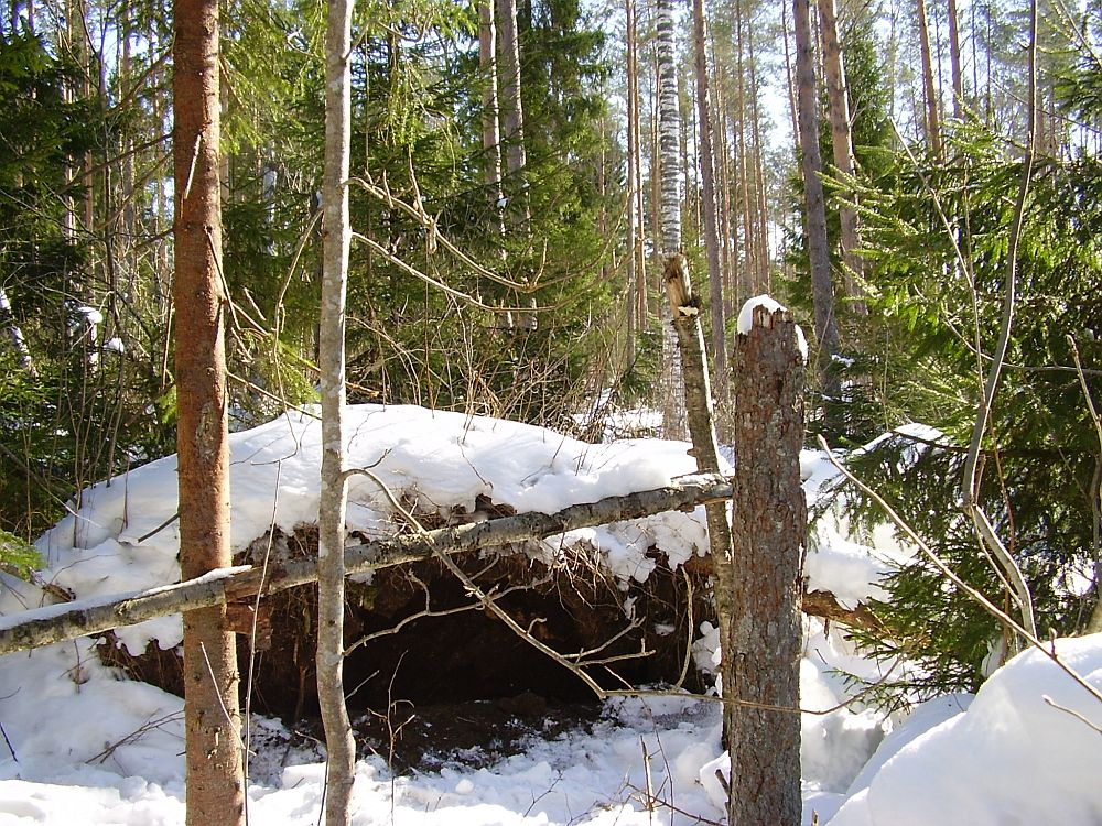 The winter dens of our bears may look very different