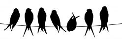 Linnulauluraadio