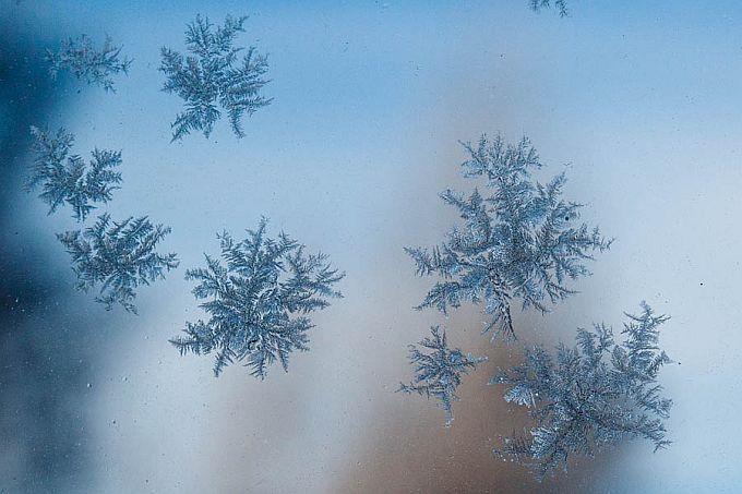 d8205b35006 Kasukas | Looduskalender.ee
