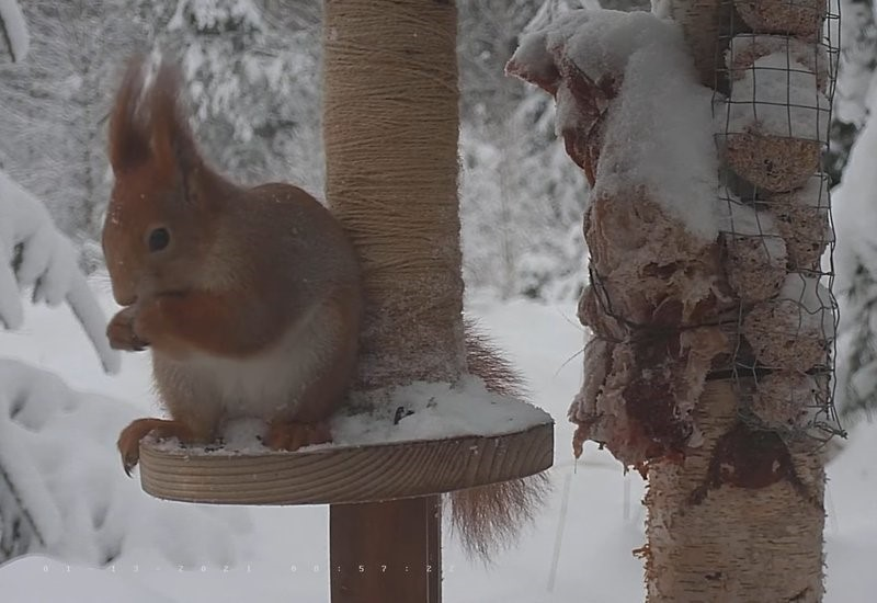 Hommikune orav koos näopildiga