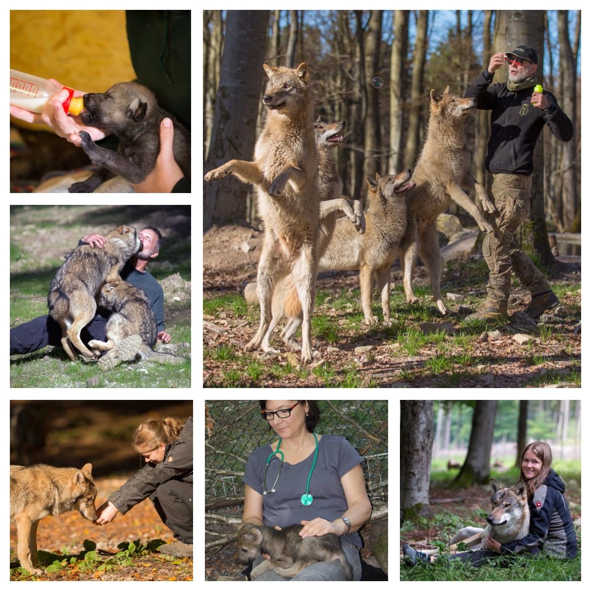 huntide sotsialiseerimine