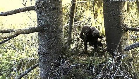 Eesti kaamera