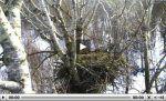 http://www.looduskalender.ee/sites/default/files/images/w-merikotka-veebipleier.thumbnail.jpg