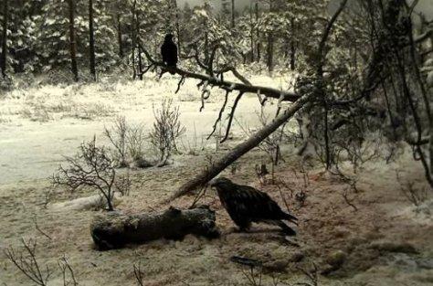 Karvasjalg-viu 26. novembril kaameras
