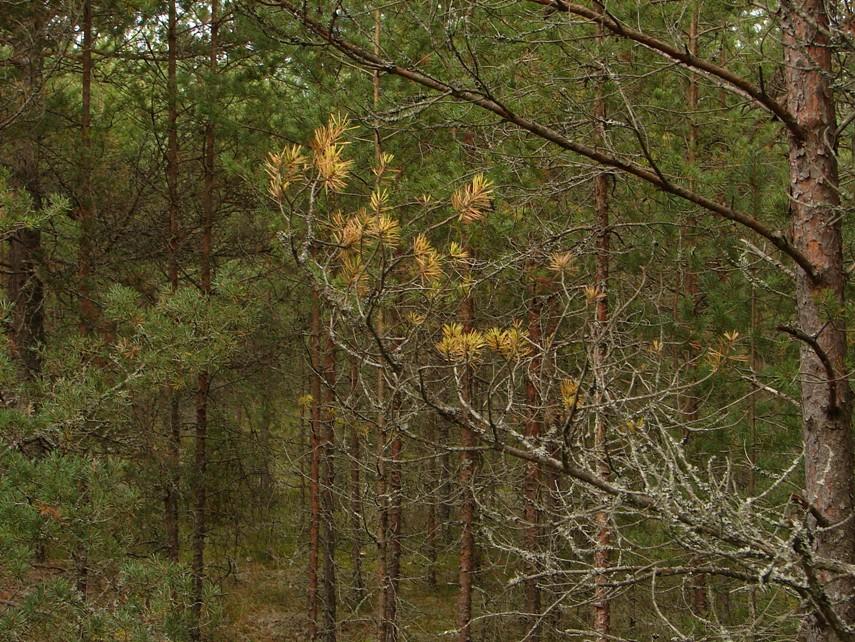 warum verlieren bäume blätter